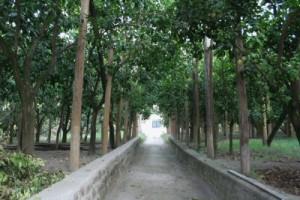giardino-02