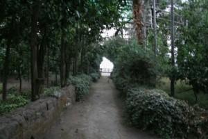 giardino-05